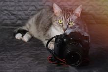 Cat Lie For Big Photo Camera