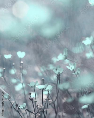 Fototapeta Beautiful mint blue watercolour fantasy flowers obraz na płótnie
