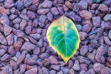 Close Up Pebbles And Leaf In Nature