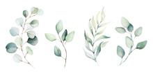 Watercolor Floral Illustration Set - Green Leaf Branches Collection, For Wedding Stationary, Greetings, Wallpapers, Fashion, Background. Eucalyptus, Olive, Green Leaves, Etc.