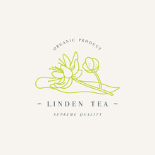 Vector Design Colorful Templat Logo Or Emblem - Organic Herb Linden Tea. Logos In Trendy Linear Style Isolated On White Background.