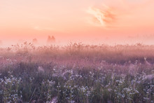 Summer Sunrise Field Of Bloomi...