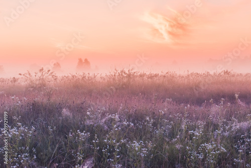 summer sunrise field of blooming pink meadow flowers - 309929199