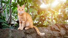 Cute Redhead Cat Sitting On A ...