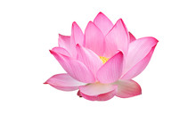 Lotus Flower Isolated On White...