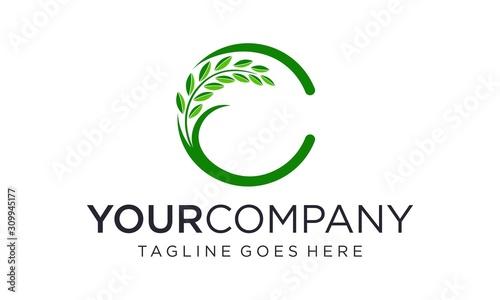 Obraz na plátně Rice or wheat agriculture logo design concept for C letter