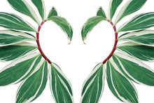 Tropical Leaves Pattern Abstra...
