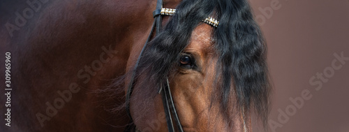 Fotografia, Obraz Close up image of eye, head and neck of Andalusian horse.