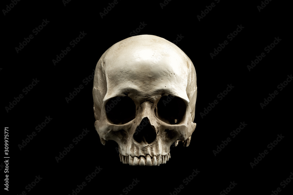 Fototapeta Frontview of natural human skull on isolated black background