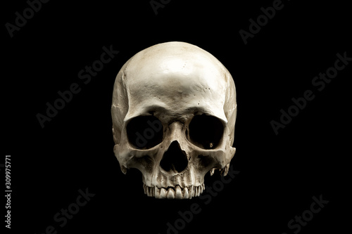 Photographie Frontview of natural human skull on isolated black background