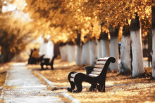 Landscape In Autumn Park Bench...