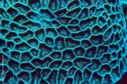 Foto coral reef macro / texture, abstract marine ecosystem background on a coral reef