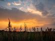 canvas print picture - Sonnenuntergang am Feld