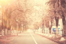 Sepia Autumn Park Landscape / ...