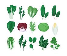 Green Salad Vegetables Leaves ...