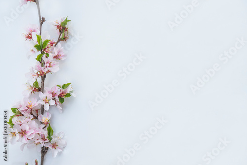 Beautiful twig with sakura blossom on the white backround Canvas Print