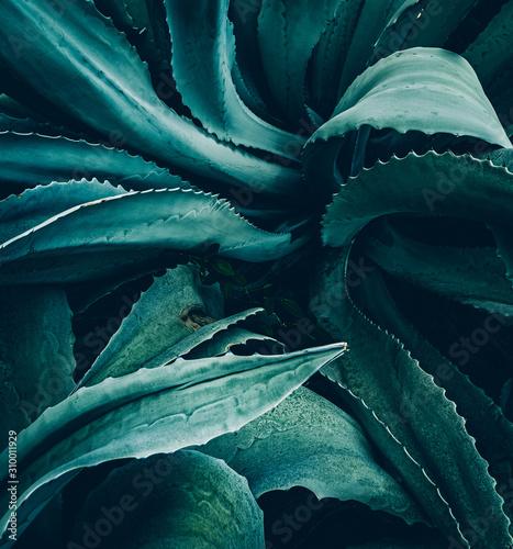 Photo abstract agave close up