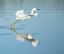 White Egrets In Cross Creek Ranch Texas