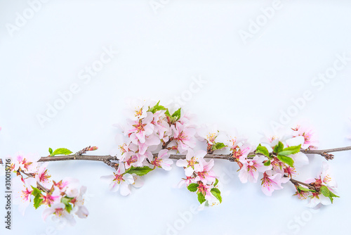 Beautiful sping holiday background Canvas Print