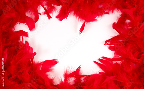 Fotomural  Red feathers. Background of red feathers