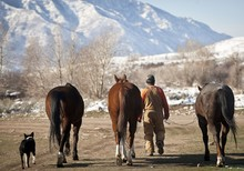 Person Taking Three Horses To ...
