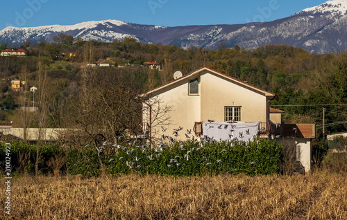 Photo Italian countryside landscape with rural houses and flock of birds over agricult