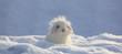 Leinwandbild Motiv white funny fluffy rabbit in the snow