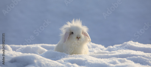 Leinwand Poster white funny fluffy rabbit in the snow