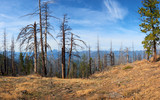 Mountain forest panoramic view on Green Ridge in central Oregon.