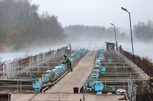Fish Industry. Man Feeds And Breeds Fish. Autumn Cold Day. The Fog Spreads Over The Water. Fish Aquaculture Farm.