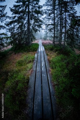 Obraz Pfad durch den Wald - fototapety do salonu