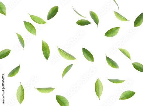 Fototapeta Flying fresh citrus leaves on white background obraz