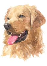 Water Colour Painting Of Golde...