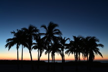 Palm Trees Silhouetted Against...