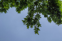Overhanging Green Leaves Create A Shelter From The Sun Image With Copy Space In Horizontal Format