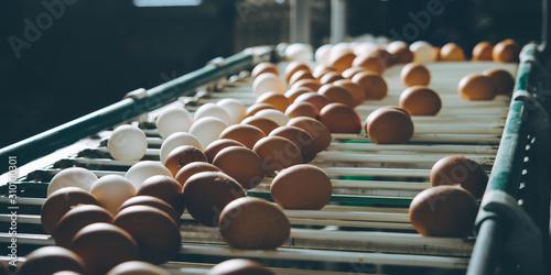 Obraz na płótnie egg factory plant agriculture poultry chicken farm
