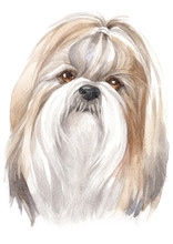 Water Colour Painting Of Shih ...