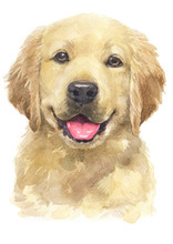 Water Colour Painting Of Golden Retriever [Puppy] 069