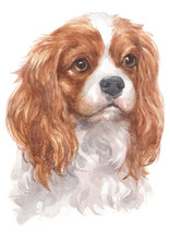 Water Colour Painting Of Cavalier King Charles Spaniel 087