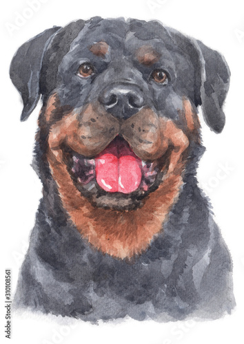 Water colour painting of Rottweiler 092