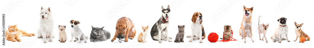 Different dogs and cats on white background
