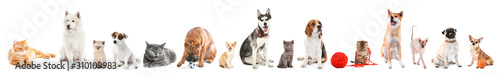 Different dogs and cats on white background Wallpaper Mural