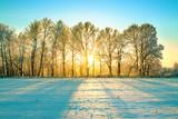 Fototapeta Na ścianę - sunny winter landscape with sunrise