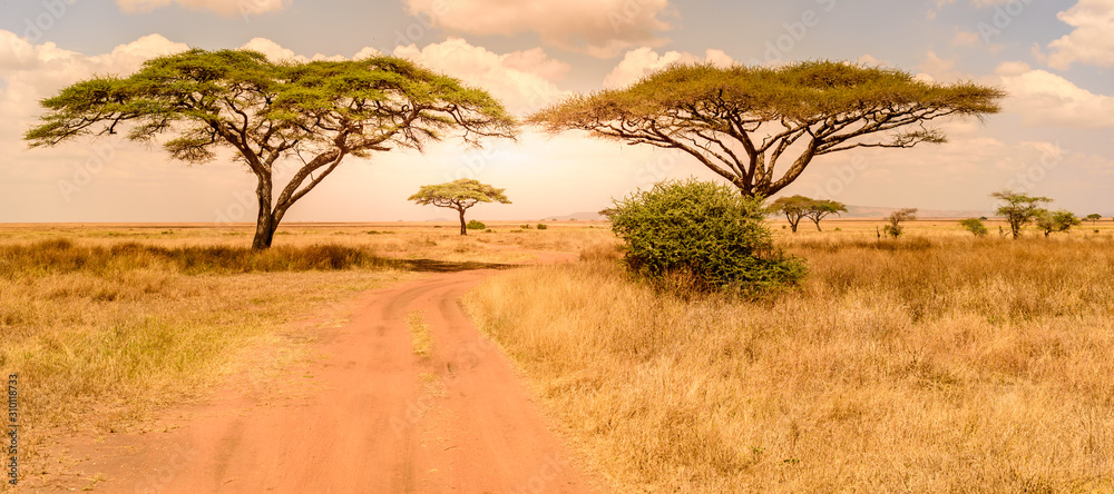 Fototapeta Game drive on dirt road with Safari car in Serengeti National Park in beautiful landscape scenery, Tanzania, Africa