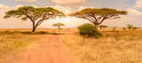 Fototapeta Sawanna - Game drive on dirt road with Safari car in Serengeti National Park in beautiful landscape scenery, Tanzania, Africa
