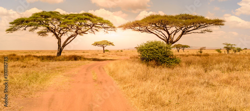 Game drive on dirt road with Safari car in Serengeti National Park in beautiful landscape scenery, Tanzania, Africa