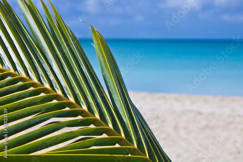 Antigua sea beach atlantic ocean relax island exotic sun Wallpaper Mural