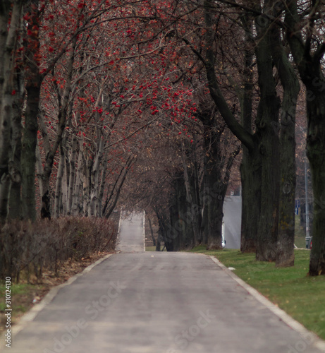 Fototapety, obrazy: road in the forest