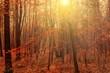 Wald im Herbst von der Sonne durchflutet
