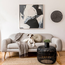 Stylish And Scandinavian Living Room Interior Of Modern Apartment With Gray Sofa, Pillows, Plaid, Plants, Design  Commode, Abstrac Paintings On The Wall. Modern Home Decor. Dog Is Lying On The Sofa.